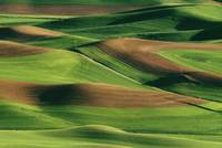 Palouse Fields, Whitman County, Washington