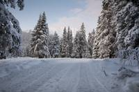 Winter scenic of a snowy road in a snowcovered for