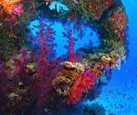 Underwater View Of Colorful Coral