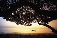 Hawaii, Oahu, Tree Swing Silhouetted Against Beach