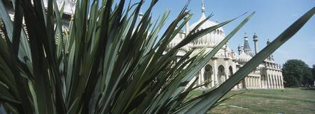 Pavillion Through Palm Leaves, Brighton, Sussex, E