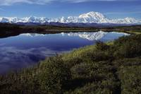 Mt McKinley Reflected in Tundra Pond Denali NP AK