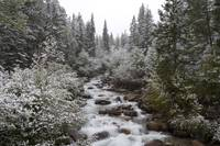 Snowy Foliage Along Stream In Autumn, Banff, Alber