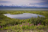 A kettle pond in summer tundra Mt. McKinley in the