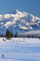 Dog Mushing In Denali State Park With The Alaska R