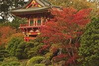 Japanese Tea Garden In Golden Gate Park San Franc