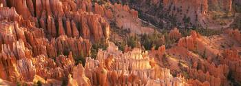 Orange Rock Formations And Trees At Bryce Canyon