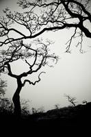 Low Angle View Of Eerie Tree Silhouettes