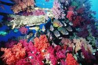 Fish And Colourful Corals