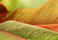 Indonesia, Bali, Close-Up Of Tropical Plant Leaves