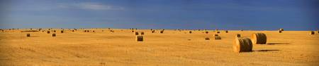 Panoramic Of A Straw Field, Near Val Marie, Saskat
