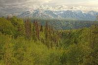 The Alsek Mountains Along The Haines Highway, Yuko