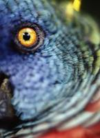 Parrot, Close Up Caribbean Islands