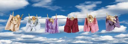 Puppies Hanging On A Clothes Line