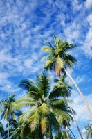 Hawaii, Tall Palm Trees Against Bright Blue Sky An