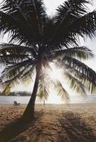 View Of Ocean And Beach Through Palm Tree, Caribbe