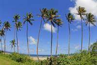 Fiji, Tall Palm Trees Line A Tropical Beach