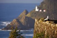 Oregon, United States Of America Heceta Head Ligh