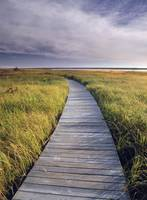 Boardwalk Along The Salt Marsh, New Brunswick, Can