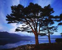 Lough Leane, Lakes Of Killarney, Killarney, County