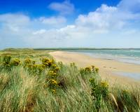 Sandunes At Fethard, County Wexford, Ireland