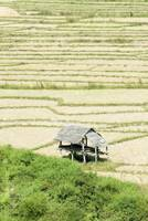 Thailand, Mae Sariang, Thatched Roof Shelters In T