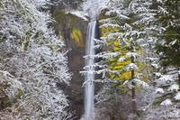 Snow Adds Beauty To Latourell Falls, Columbia Rive