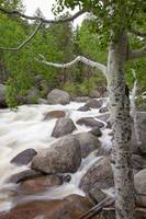 Colorado, Rocky Mountains, A Raging River With Lus