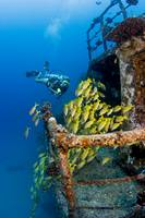 Hawaii, Oahu, Waikiki, Diver Exploring Ship Wreck