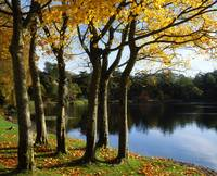 Lake And Trees, Mount Stewart, County Down, Irelan