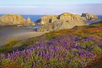 Wildflowers And Rock Formations Along The Coast At
