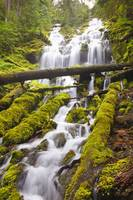 Proxy Falls In Willamette National Forest Oregon,