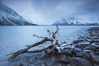 Log Along The Shores Of Kathleen Lake, Kluane Nati