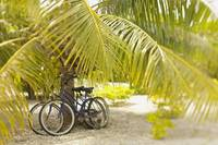 French Polynesia, Tuamotu, Palm Tree With Two Bike