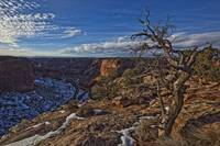 Image Of Tree With Vibrant Blue Sky On Canyon De C