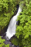 Lush Green Foliage Along Shepperd's Dell Falls, O