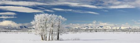 Pasture And Aspen Trees In Winter, Alberta, Canada