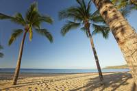 Hawaii, Lanai, Hulopoe Beach, Tall Palm Trees On A