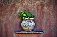 Rustic Detail Of Potted Plant Against Adobe Wall,