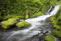 Mccord Creek In Columbia River Gorge National Scen