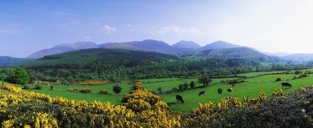 Mourne Mountains, County Down, Ireland, Grazing An