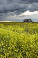 Yellow Sweet Clover And Old Abandoned Farm, Saskat