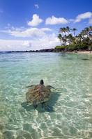 Hawaii, Green Sea Turtle