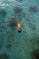School Of Fish Encircling Woman Floating In Tropic