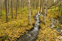 Small creek flows through autumn leaf covered fore