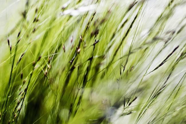 Stunning ornamental grass artwork for sale on fine art for Green ornamental grass