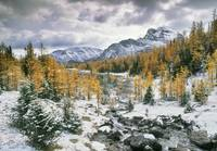 Larch Valley, Banff National Park, Alberta