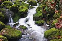Green Moss On The Rocks Along A Small Waterfall, H