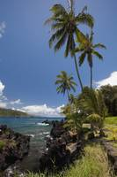 Hawaii, Maui, Keanae, Palm trees and sunny blue sk