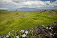 Hawaii, Maui, Kula, A stone wall lines a country r